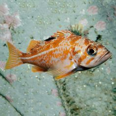 """Classroom Activity: """"What is a Fish? First Grade Science, Monterey Bay Aquarium, School Notebooks, Science Curriculum, Visual Aids, Classroom Activities, Science Experiments, Homeschool, Fish"""