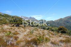 Kahurangi National Park, New Zealand Royalty Free Stock Photo Image Now, Simply Beautiful, New Zealand, Two By Two, National Parks, Royalty Free Stock Photos, Photography, Photograph, Fotografie