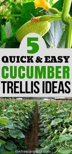 Vegetable Gardening Ideas: Cucumbers grow better and stay healthier when grown vertically. Here are 5 cucumber trellis ideas to help you grow your best cucumber ever!