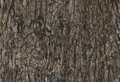 texturas-de-madera-alta-calidad-para-diseño