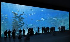 World Travel News - Nausicaa to undergo significant expansion in May Big Aquarium, Marine Aquarium, Aquarium Ideas, Places Around The World, Around The Worlds, Nausicaa, Led Aquarium Lighting, Europe, Story Video