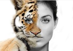 This Photoshop article will show you how to create a half woman half tiger picture using Layer masks. These skills are covered in our Photoshop course .  For For this you will need a portrait picture and a picture of an animal I choose a tiger. The first thing you are going to want to do is, make …
