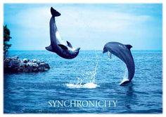 Synchronity