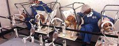 Expérimentation sur les chiens