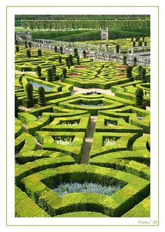 I love formal gardens. I could just walk around for hours and admire the beauty! French formal garden - Villandry, Centre