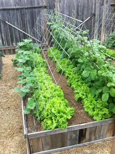 Garden Projects 19 gardening ideas for beginners, vegetable gardening ideas backyard ideas images small garden ideas on a budget small backyard garden ideas large garden ideas small garden landscaping ideas garden designs picture small garden ideas Pinter Backyard Vegetable Gardens, Small Backyard Gardens, Vegetable Garden Design, Small Garden Design, Small Gardens, Garden Landscaping, Landscaping Ideas, Vertical Vegetable Gardens, Gardening Vegetables