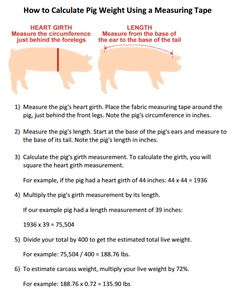 How to Calculate Pig Weight Using a Measuring Tape