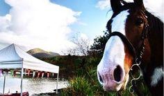 Rover loves exploring Connemara with Connemara Equestrian Escapes Riding Holiday, Ireland Holiday, Connemara, Horse Riding, Horseback Riding, Equestrian, Exploring, Horses, Animals