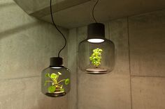 Hanging Terrarium Lamps - The 'Mygdal' Plant Light Incorporates a Living Shrub into the Illuminator (GALLERY)