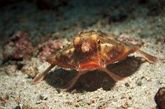 Selfies de animais marinhos para salvar oceanos!