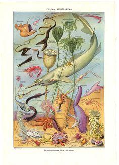 Sea Life Print  Marine Animals Plants 55 Years by CarambasVintage, $20.00