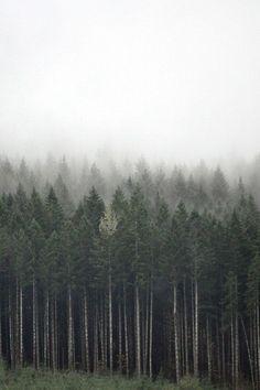 [y_h_b_t_i] | grove