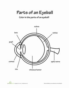 Human eye coloring page with labeling from crayola.com