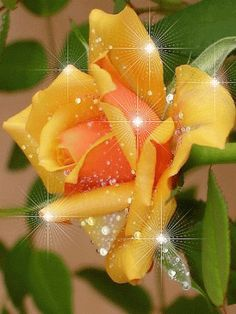 Some wonderful examples of rose gardens. Flowers Gif, Beautiful Rose Flowers, Beautiful Gif, Wonderful Flowers, My Flower, Flower Power, Glitter Graphics, Yellow Roses, Happy Birthday