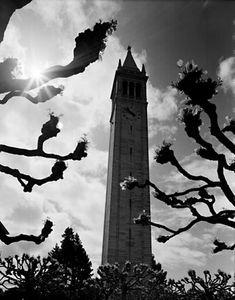 Ansel Adams - Campanile, University of California, Berkeley [and pollarded trees] (photo newly-discovered)