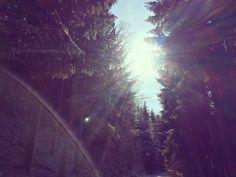 © Lars Ternes Wien 2016 Snowfall Schneefall Sunbeams Sonnenstrahlen Sun Snow Forest Trees Winter Attersee Schnee Weg Wald Sonne Österreich Austria Landscape Photographers, Celestial, Sunset, Black And White, Outdoor, Pictures, Sun Rays, Landscaping, Snow