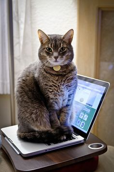 Cat-like typing