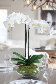 """White Silk Phalaenopsis Orchid Arrangement - Nature"" I need some artificial orchids for beauty that I can't kill. Silk Orchids, Phalaenopsis Orchid, Orchid Plants, White Orchids, White Flowers, Beautiful Flowers, Orchid Seeds, Orchid Flower Arrangements, Orchid Centerpieces"
