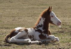 Baby Horses | Photo by Don Seyffarth, March 2009