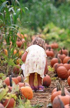 Happy Day Farm, Cows Mooing, Pumpkin Farm, Pumpkin Picking, Autumn Garden, Girl Falling, Autumn Theme, Fall Pumpkins, Fall Halloween
