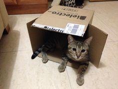 Cosas de gato