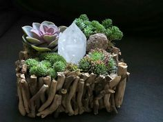 Beautiful DIY Succulents Plants And Crystal Garden Design - Onechitecture Succulent Landscaping, Succulent Gardening, Cacti And Succulents, Planting Succulents, Planting Flowers, Succulent Terrarium Diy, Indoor Gardening, Cactus Plants, Suculentas Diy