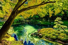 | Nitobe Sunshine - 2011 | seen on a beautiful October day five years ago.