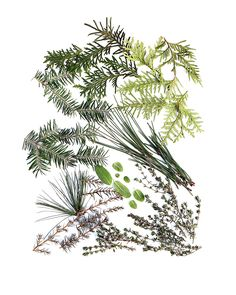 winter greens (mary jo hoffman)