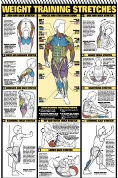 "Weight Training Stretches and more. A weight training book of 12 charts featuring: #Anatomy, #Stretching, #back, #Chest, #Leg, #Abdominal, #Triceps, #Biceps, #Forearm, #Shoulder, and Two #dumbbell workout posters. Large laminated posters in a ""flip"" book. Can either be used together or make a great decoration for any home gym. #fitness #weightlifting #posters"