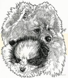 8×9 ink and colored pencil. Original unavailable. / CHALLENGES: / FEATURES: / The Pomeranian (often known as a Pom or Pom Pom) is a breed of dog of the Spitz type that is named for the Pomerania region in Germany and Poland in Central Europe. Classed as a toy dog breed because of its small size, the Pomeranian is descended from the larger Spitz type dogs, specifically the German Spitz. It has been determined by the Fédération Cynologique Internationale to be part of th...
