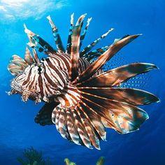 Lápices de Colores en forma de pez Ángel-Party Favours De Bolsas-Océano animales-Pez