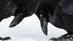 The Year's Most Beautiful (And Bizarre) Bird Photography  | Co.Design | business + design