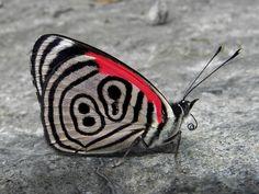 Resultado de imagen para mariposa entre rriana numero 88