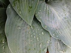 pluie et plantes