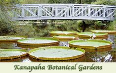 Kanapaha Botanical Gardens  Gainesville, FL  $7/person admission. Bring lunch and dine on the lawn or sit on the benches in the bamboo garden. Smell everything in the herb garden. Green spaces promotes mindfulness and lessens stress. Conversation is sure to flow easily!
