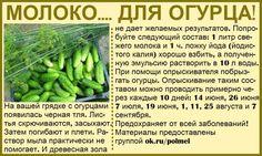 Odnoklassniki Source by Summer House Garden, Lawn And Garden, Garden Art, Garden Plants, House Plants, Garden Design, Home And Garden, Harvest Day, Small Farm