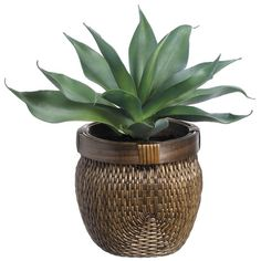You'll love the Agave Foliage Plant in Basket at Joss & Main - With Great Deals on all products and Free Shipping on most stuff, even the big stuff.