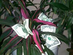 MONEY TREE    There are many creative ways to give money as a gift. These tips and tricks will allow you give money in unique ways for birthdays, graduation, and other major holidays.