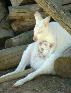 Kanguru anne ve bebek.