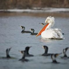 Visit Danube Delta Biosphere Reserve, the Authentic Nature of Romania. Unique Experiences at the Birds Paradise ✅Verified Locations ✅UNESCO Heritage Danube Delta, Utila, Romania