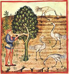 From:  The Tacuinum Sanitatis, XIV century  unknown master