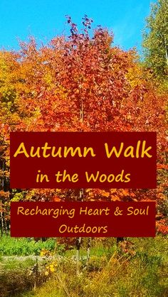 Enjoy the beauty of an autumn walk in the Maine woods.  #autumn #maine #nature  via @RobinFollette