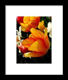 tulip, yellow, garden, flower, bloom, blossom, nature