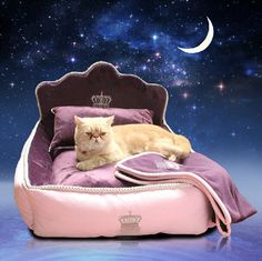 Luxury Princess Pet Bed With Pillow Blanket Dog Bed Cat Mat Sofa Dog House Dog Nest Sleep Cushion Kennel New Free Shipping-in Houses, Kennels & Pens from Home & Garden on Aliexpress.com | Alibaba Group
