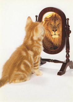 Today's Self-Esteem Junky