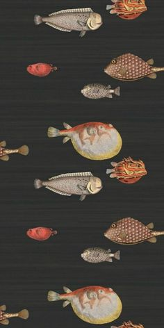 Buy Cole and Son Acquario at Wallpaper Trail for only with FREE UK postage. All wallpapers from the Cole and Son Fornasetti II collection available. Fish Wallpaper, Wallpaper Decor, Bathroom Wallpaper, Print Wallpaper, New Wallpaper, Fabric Wallpaper, Modern Wallpaper, Wallpaper Ideas, Wallpaper Toilet