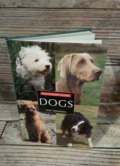FACTFINDER Guide Dogs Iain Thompson 1999 Hardcover Dog Breeds Care Training  #HardCover