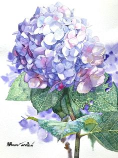 Kitipong Maksin May 18 Watercolor Cards, Watercolor Illustration, Watercolour Painting, Watercolor Flowers, Watercolors, Botanical Flowers, Botanical Art, Hydrangea Painting, Flower Artwork