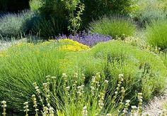 Le jardin sec : un jardin économe en eau : Grâce à des plantes adaptées, qui exigent peu d'entretien et d'arrosage, il est possible de réaliser un jardin sec économique et respectueux de l'environnement. Voici un petit guide pratique pour créer un jardin facile à vivre et original, d'inspiration méditerranéenne.