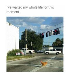 why do the chicken cross the road???